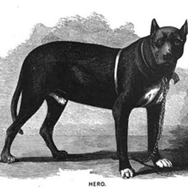 "Print of the dog, ""Hero"""