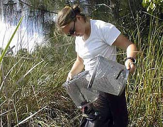 An intern monitors the diversity and abundance of aquatic species in Everglades National Park.