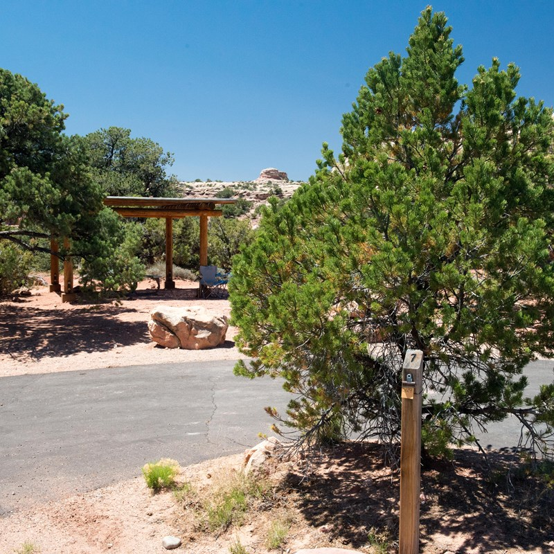 a paved parking area with a juniper tree and a shade structure in the distance