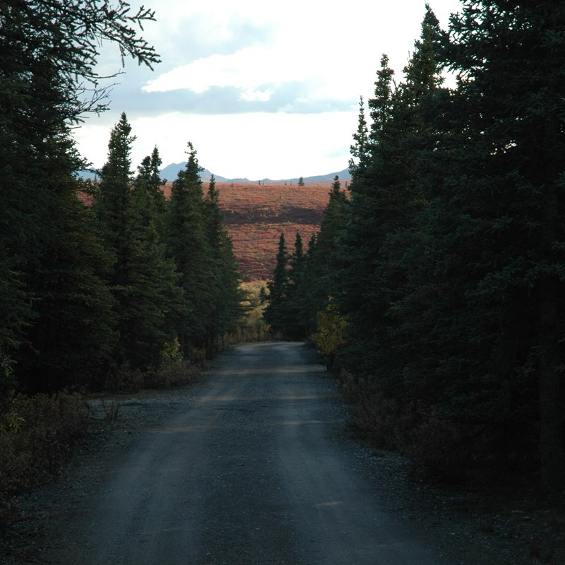 dirt road in a forest with hills in the distance