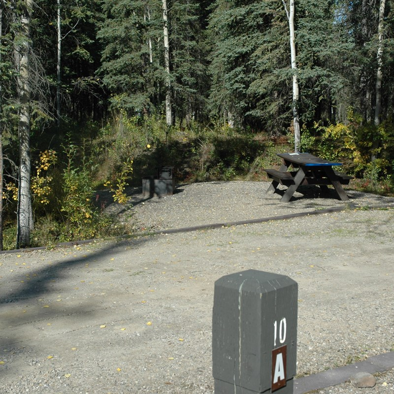 an empty campsite in a spruce forest