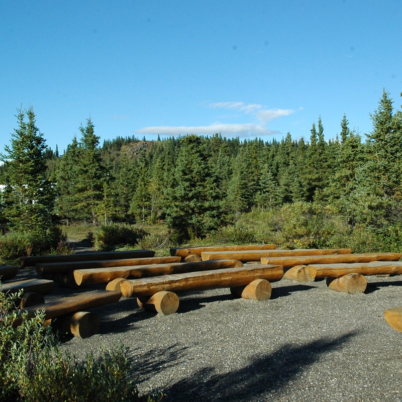 numerous wooden benches in a spruce forest