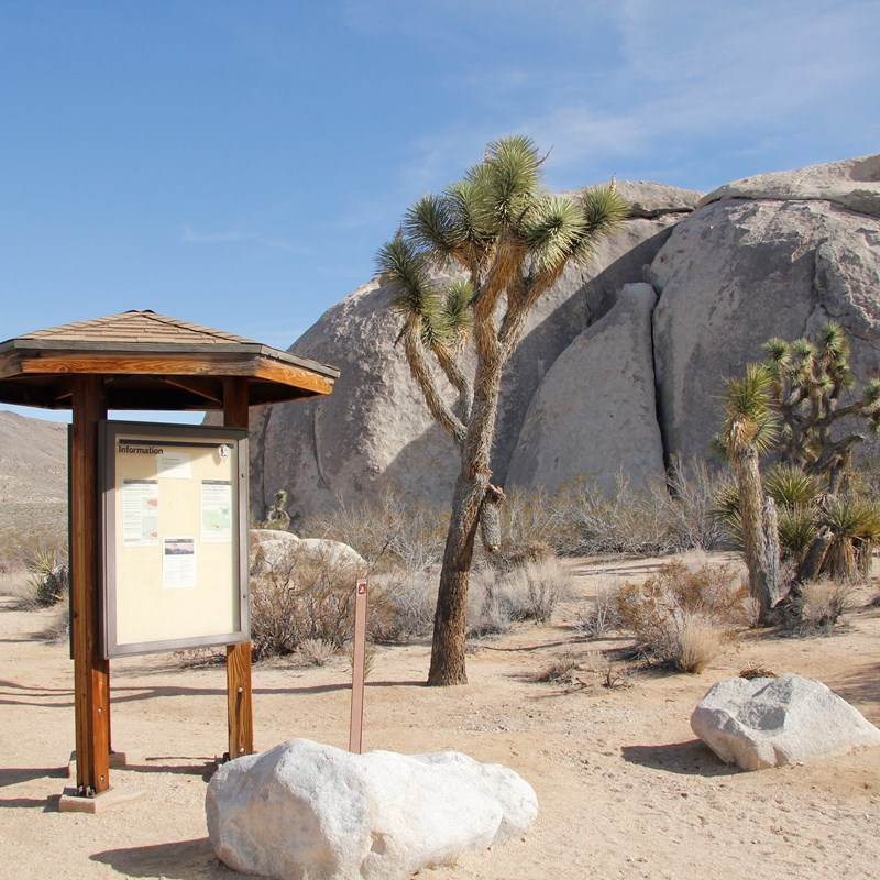 Belle Campground information board is shown in front of a trail and a Joshua tree.