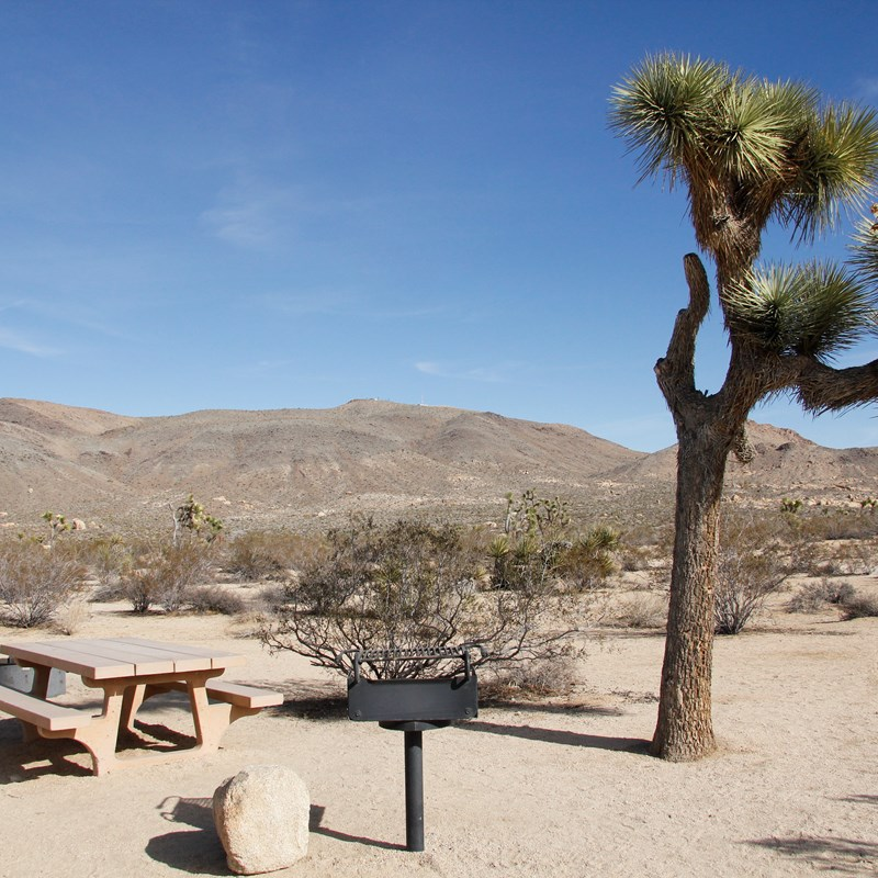 A campground with a picnic table, a grill and a Joshua tree.