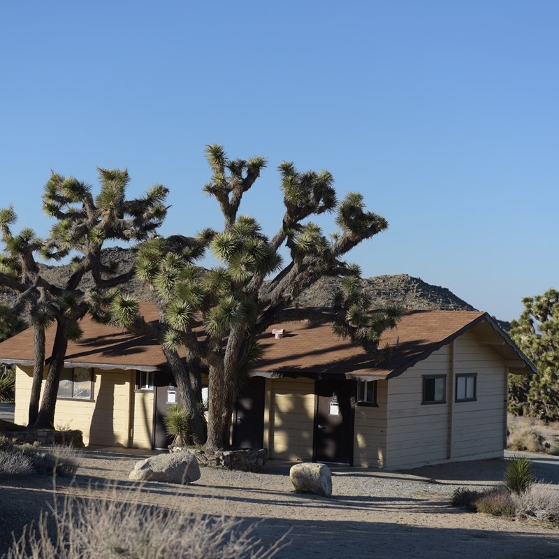 A building is surrounded by Joshua trees.