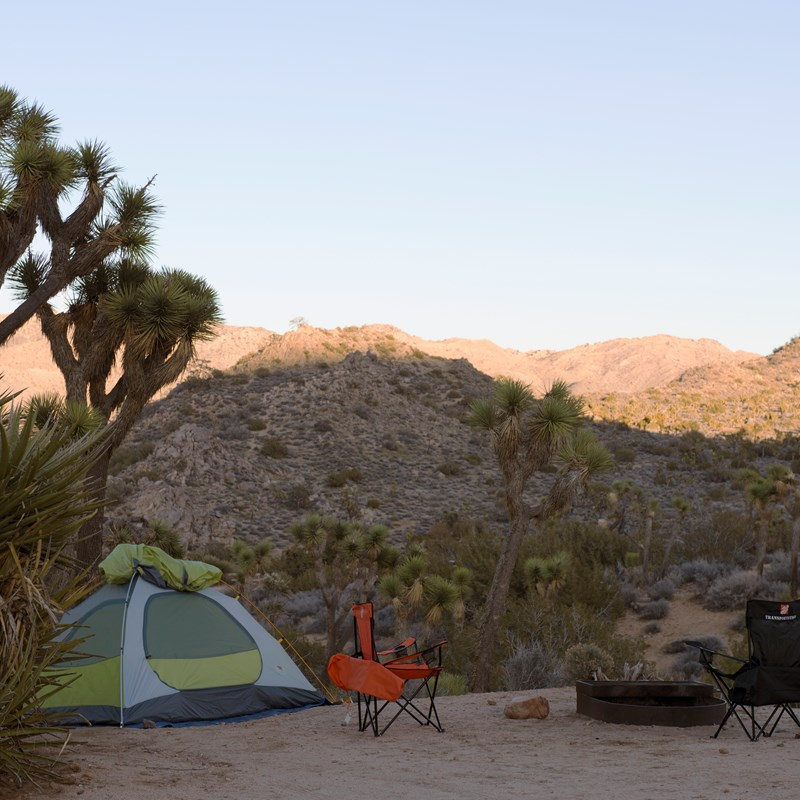 A Joshua Tree, tent and two chairs are around a fire pit.