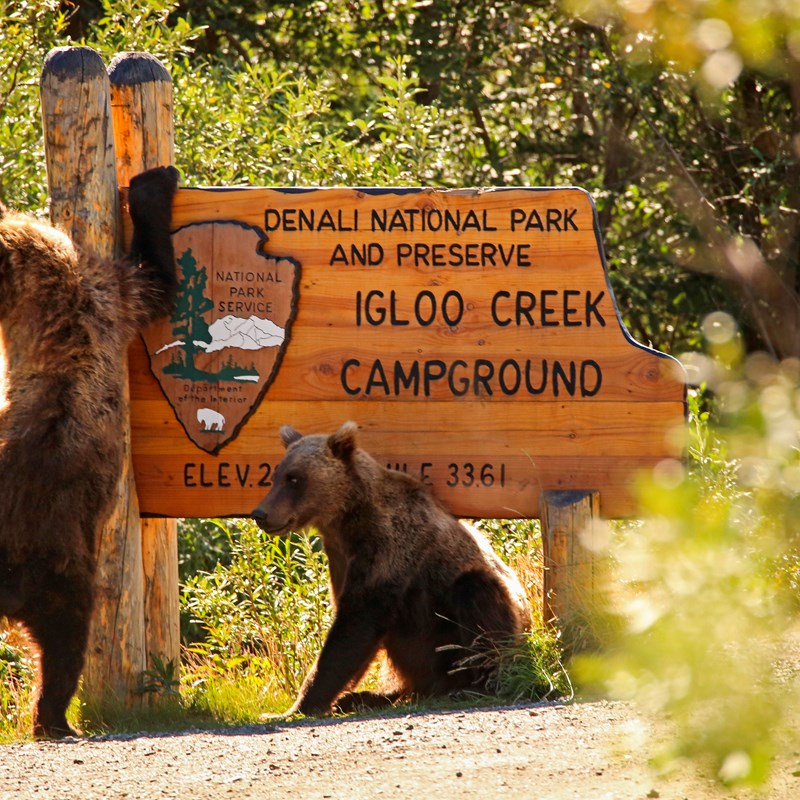 two brown bears scratching at a large wooden sign that reads