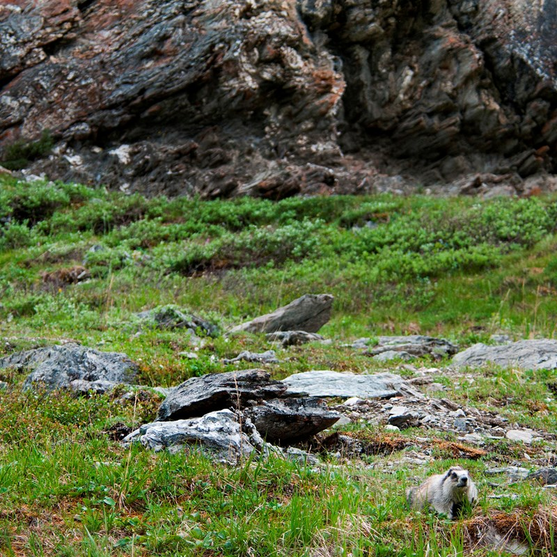 two marmots sitting on rocks