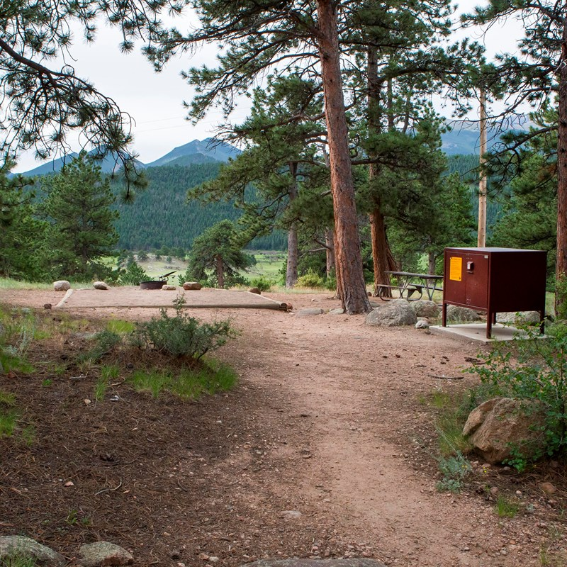 Dirt campsite shaded by pine trees
