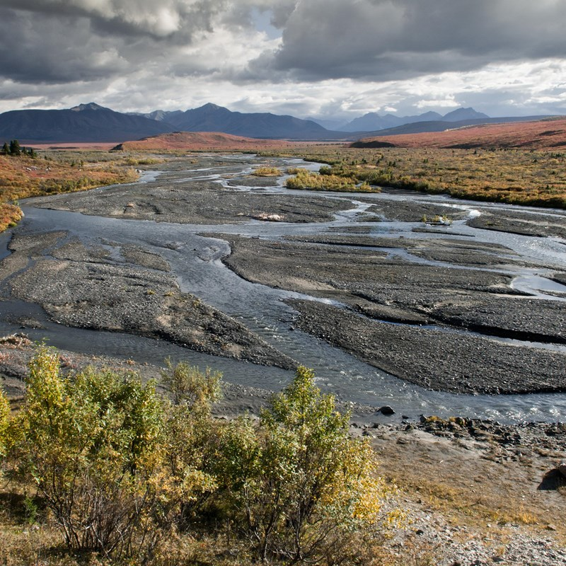a braided river flowing through a brushy landscape