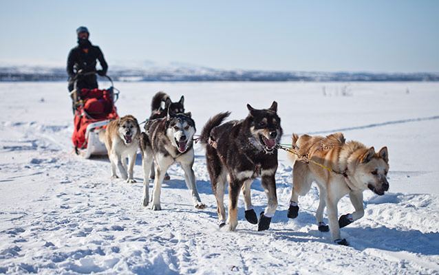 Huskies Pulling Sled images