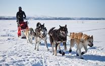 The Science of Sled Dogs