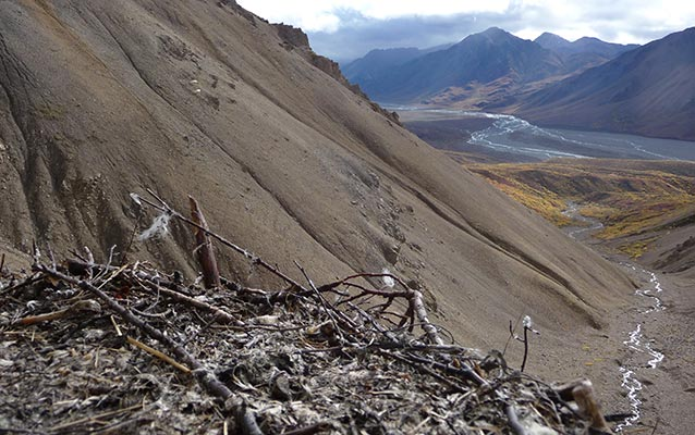 Image of a golden eagle nest, looking out over a river valley, with a steep scree slope to the left