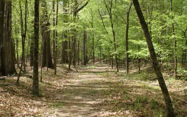 Old Natchez Trace Trail, photo taken by Doug Schmidt