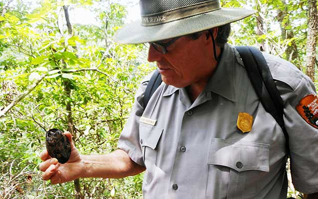 Park ranger Jerry Hightower inspecting a musk turtle.