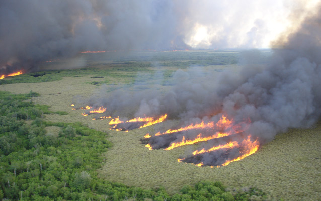 Fire burning in habitats