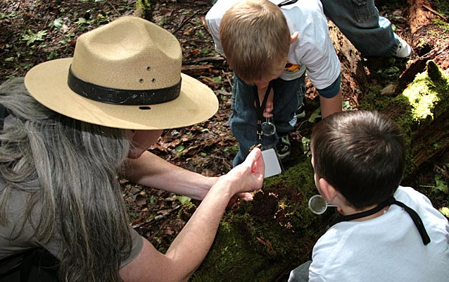 A park ranger helps two young boys look at life on a moss-covered log