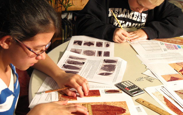 students classifying a fossil leaf