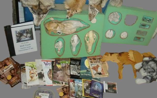Books, furs, skulls, and other objects relating to wolves