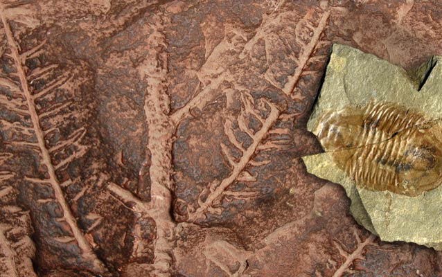 Plant fossil (background) on reddish rock. On the right, a trilobite on green shale.