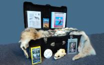 Contents of Wolf Traveling Trunk