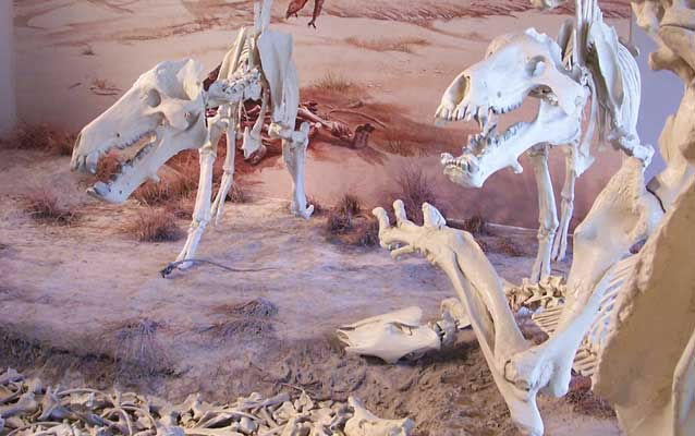 The Agate Fossil Beds Diorama showing the waterhole death trap.