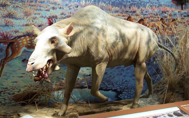 Model reconstruction of ancient pig-like animal