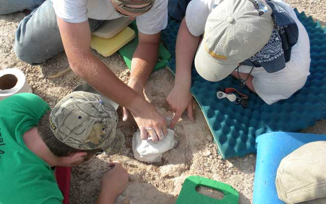 Paleontologists collect fossils at the Saber Site