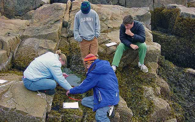Students huddle on Acadia's coast exploring intertidal zones.