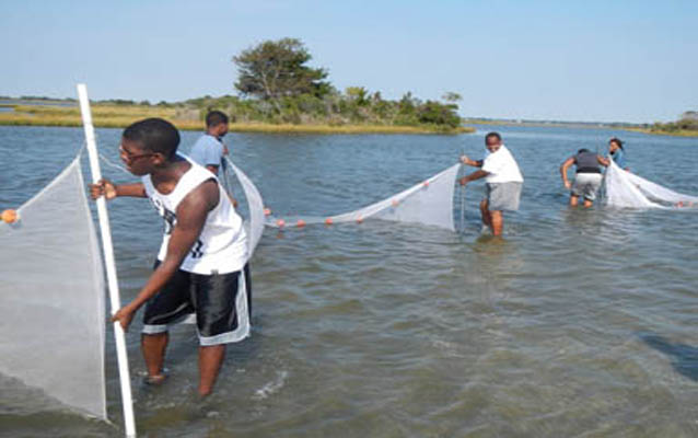 students use seine nets to collect fish samples