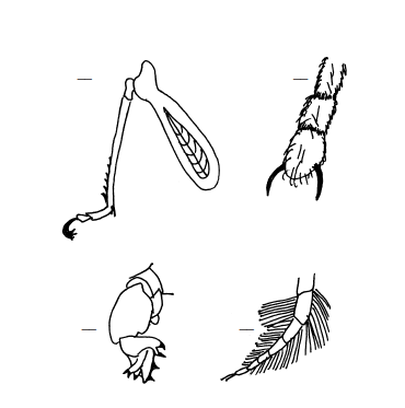 Selection from the Insect Workbook - kinds of legs