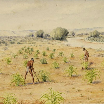 Native Americans hoeing corn.