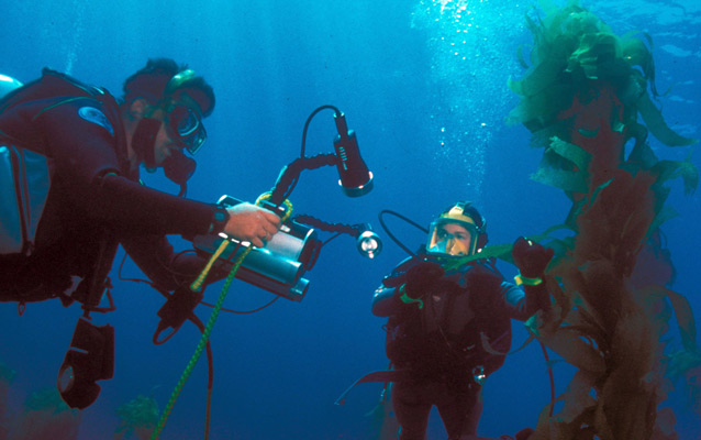 Park rangers diving in kelp forest.