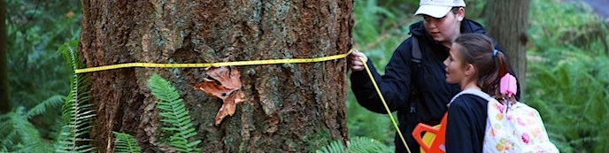 Students survey old-growth forest during a Mount Rainier Institute course.