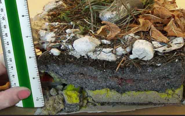 A ruler is used to measure the layers in a completed geology shoebox.