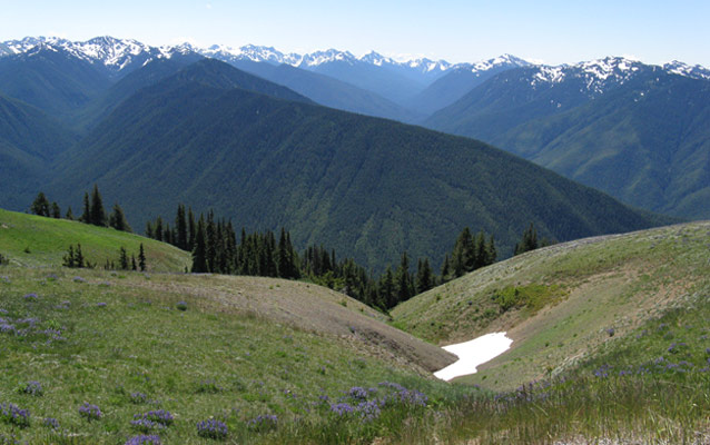 A mid-summer patch of snow remains at Hurricane Ridge.