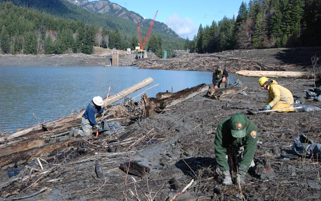 Washington Conservation Corps Crews and park service employees replant native vegetation with dam deconstruction ongoing in the backgroung.