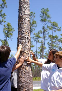 Students touch a pine tree