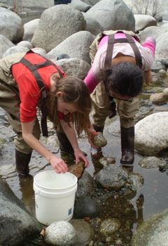 Students search for macroinvertebrates in the Kaweah River.