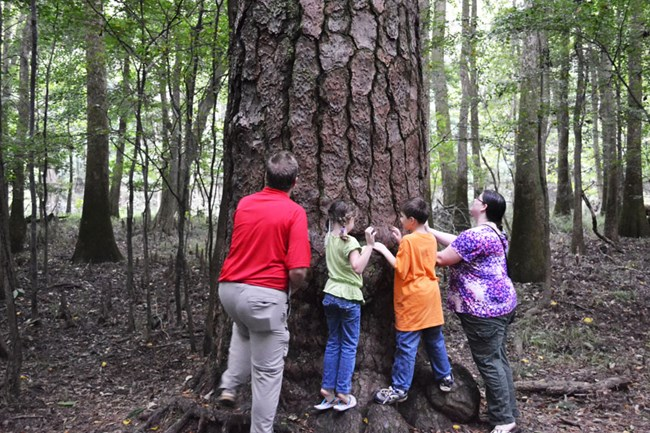 Family looking at Loblolly pine.