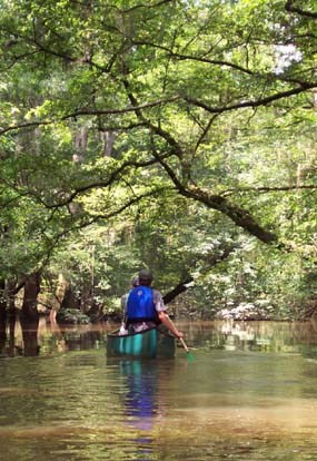 Canoeing on Cedar Creek