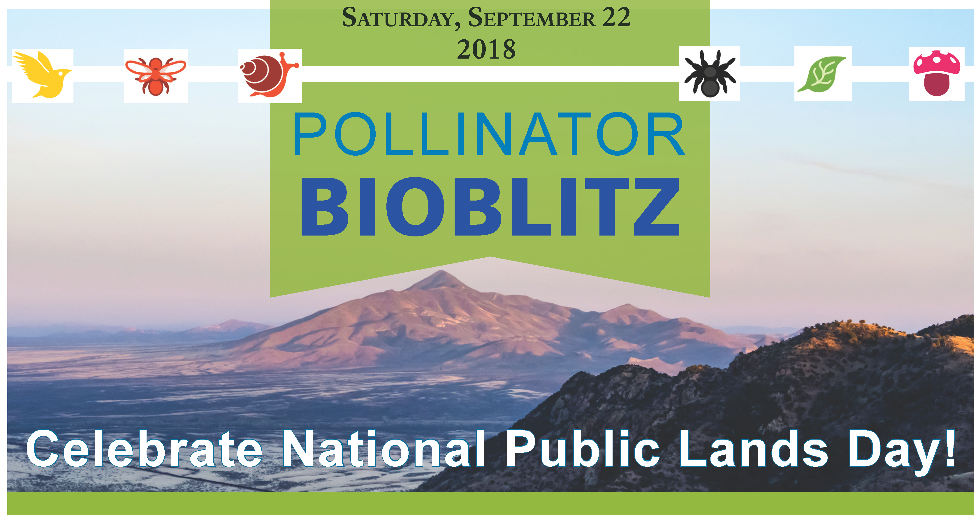 Promotional photo for Pollinator BioBlitz