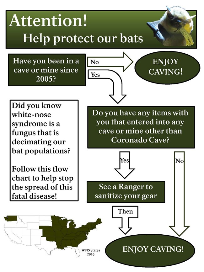 white-nose syndrome flow chart