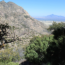 Oak trees on a slope, rocky peak in mid-frame, mountain peak in the distance