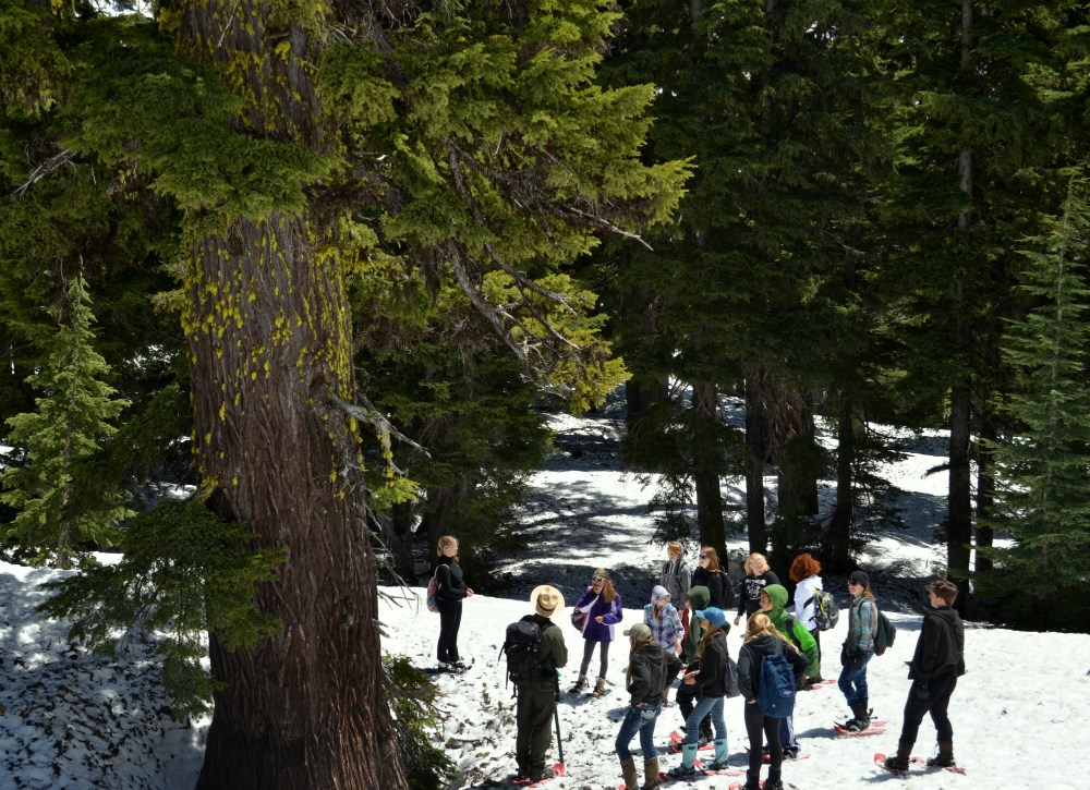 Students observe a giant mountain hemlock.