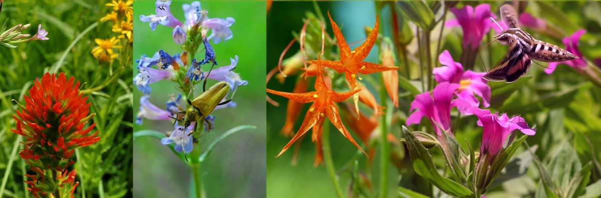 four different wildflower, two with pollinators