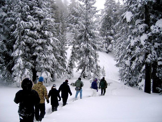 Ranger leads visitors in a snowshoe walk through the forest.