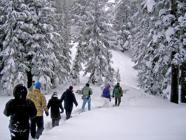 Ranger and Visitors Snowshoeing through the Forest