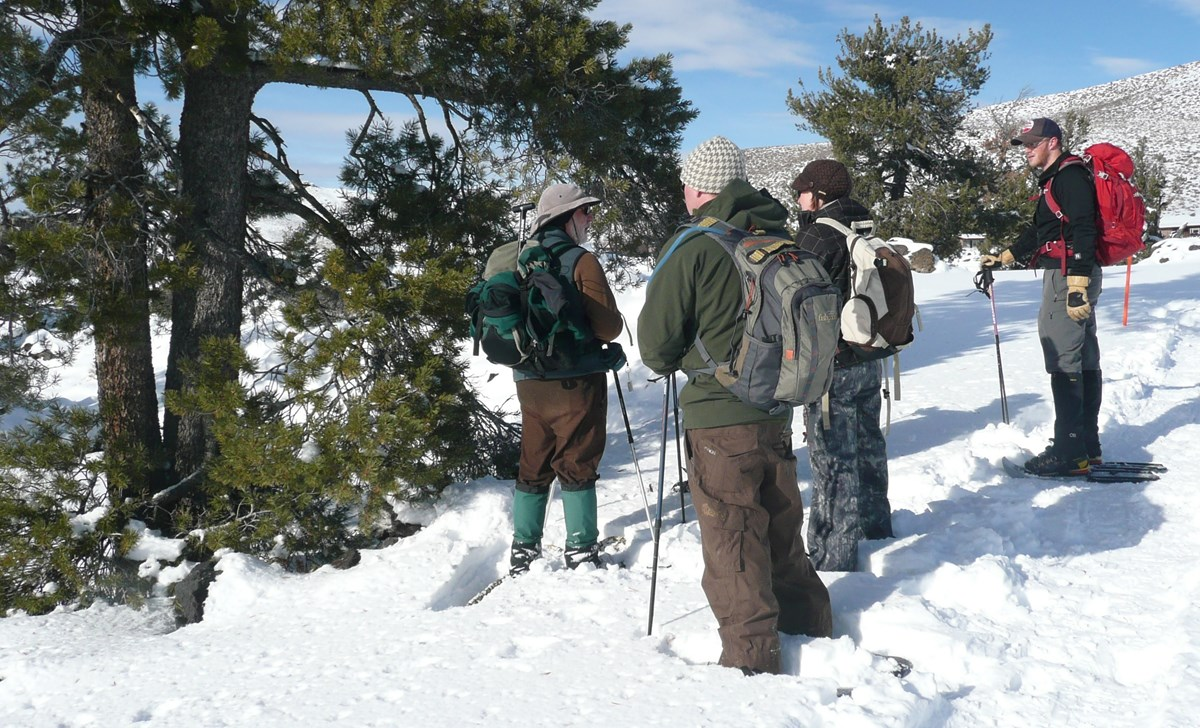 people looking at a pine tree during winter