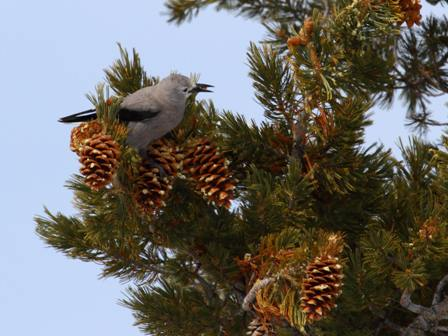 bird and pine tree